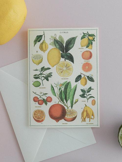 Cavallini   Jardin Notecard Set