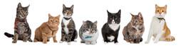 cat-group.jpg