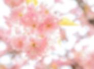 Schermafbeelding 2020-03-29 om 13.08.48.