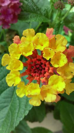 A mini flower