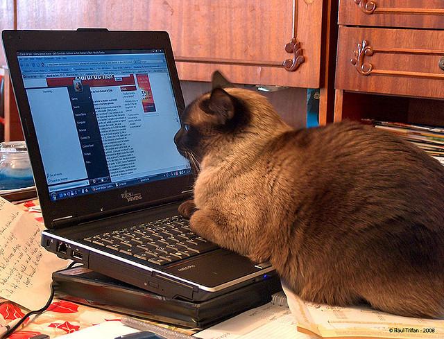 cat_ec794a1f1c_z.jpg