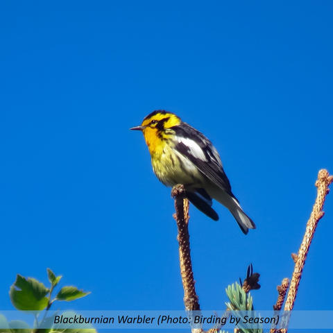 Janices Birds.jpg