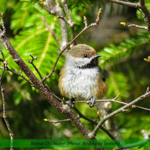 Janices Birds 4.jpg