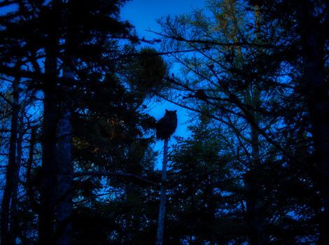 Joe Brazzil Pic 3 Owl.jpg