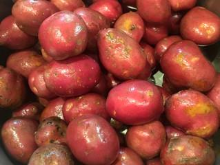 La pomme de terre Dalida bio