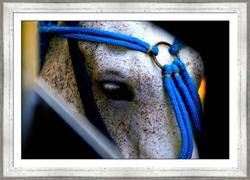 Horse Eye  57.75%22 x 41.75%22  782