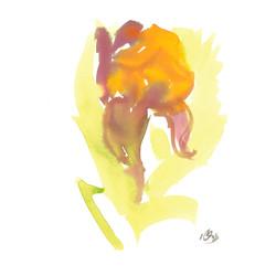 orange flower one