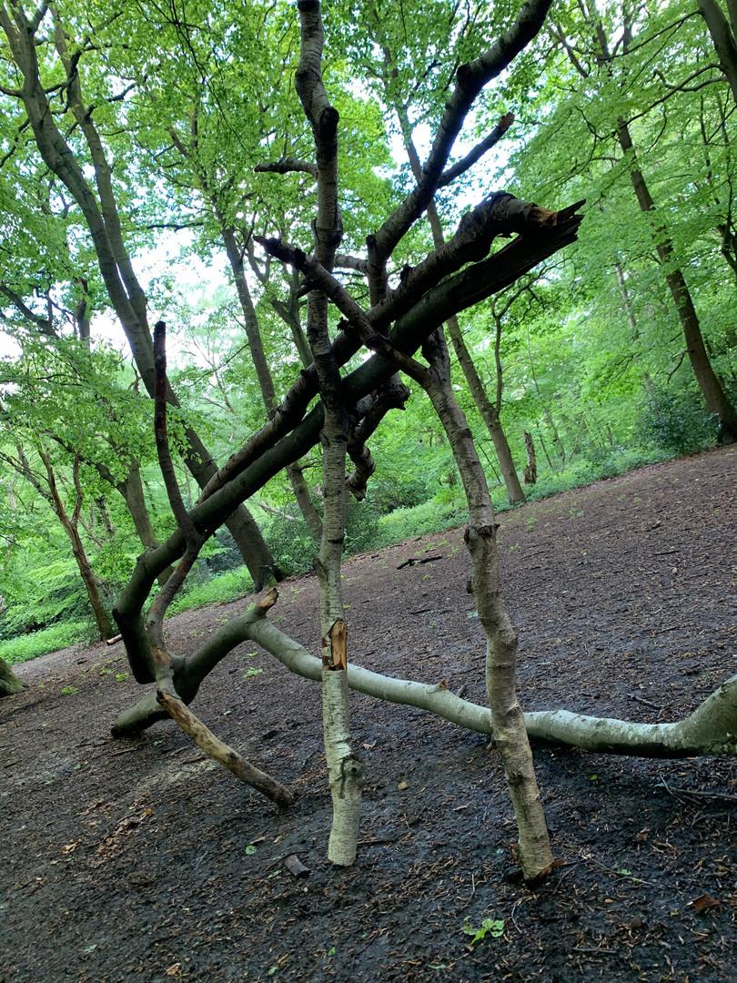 'Tri,Hampstead Heath'