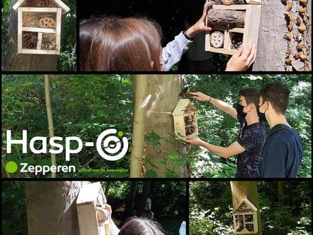 Hasp-O Zepperen - Insectenhotels