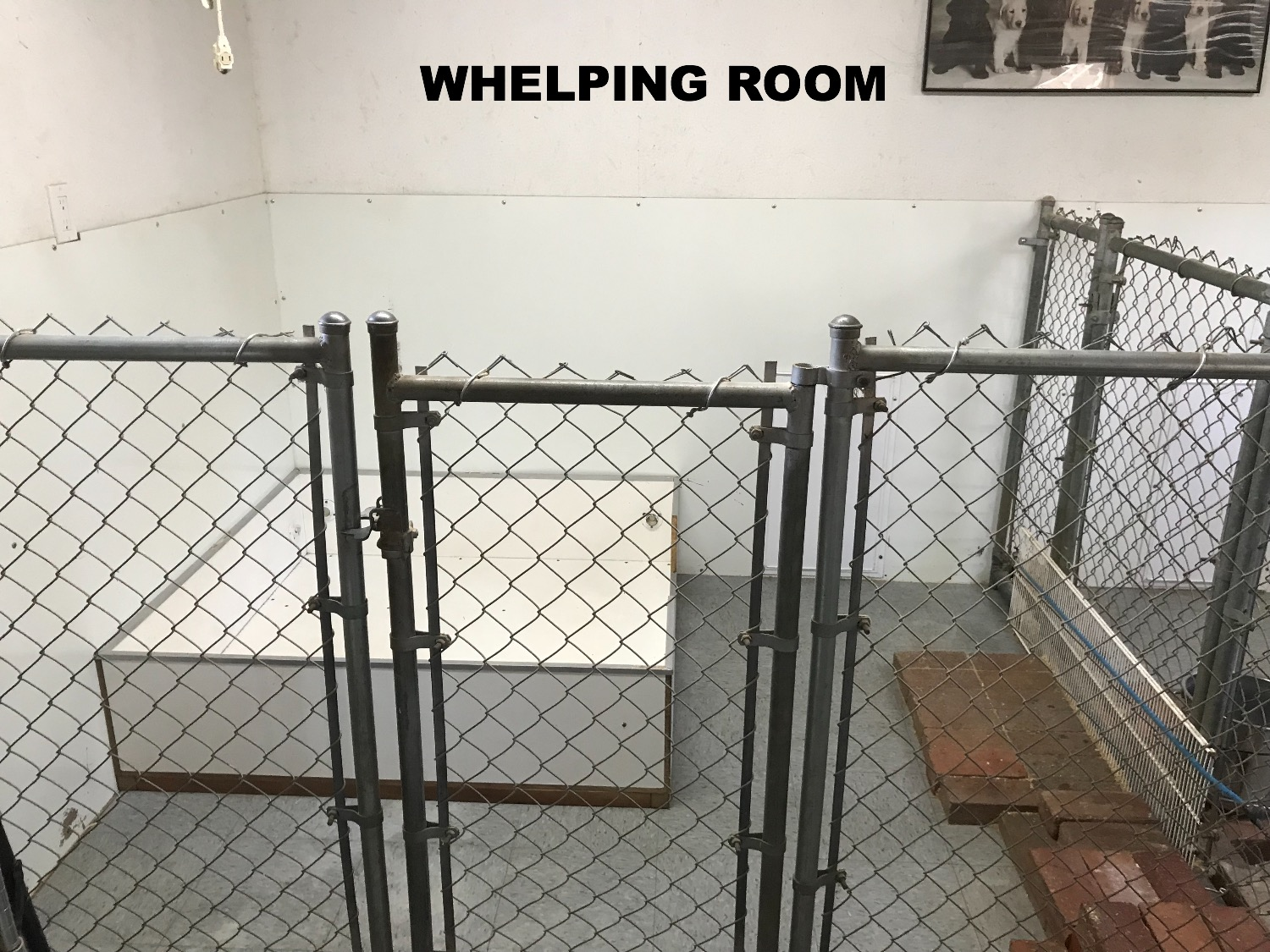 Whelping Room