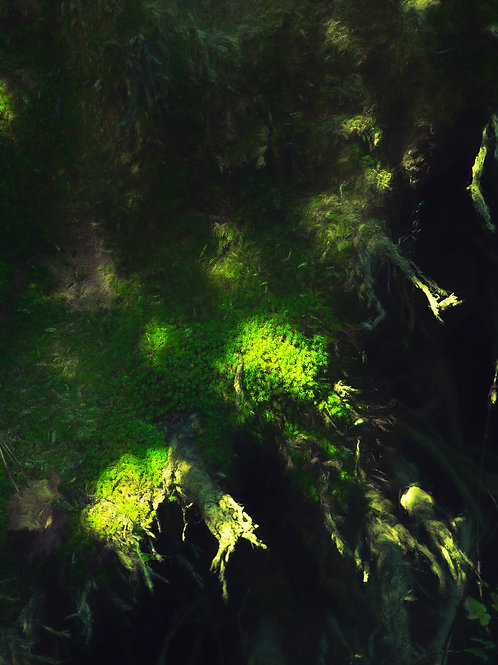 Moss with Dots of Light