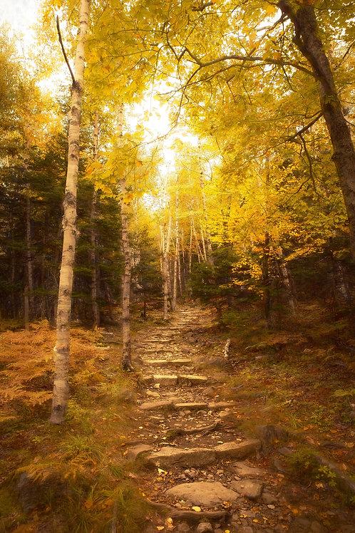 Autumn Path in Acadia