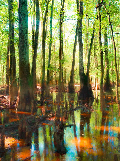 Colors of Congaree