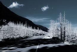 dead trees5.jpg