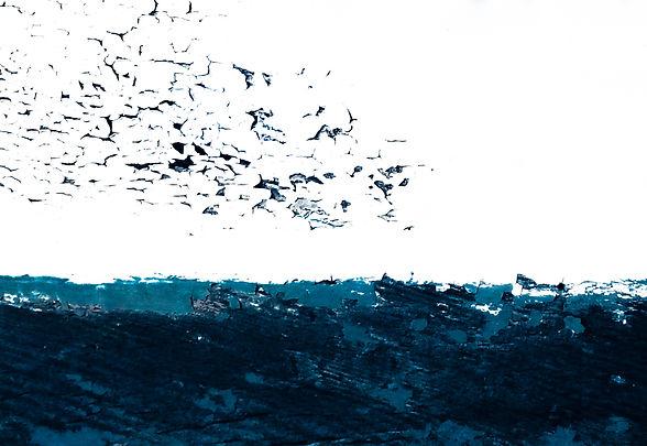 Starlings over Sea.jpg