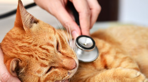 Do you live with companion animals?