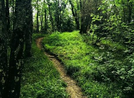 Fantastic Walk from Quarazzana to Cascate di Fiacciano