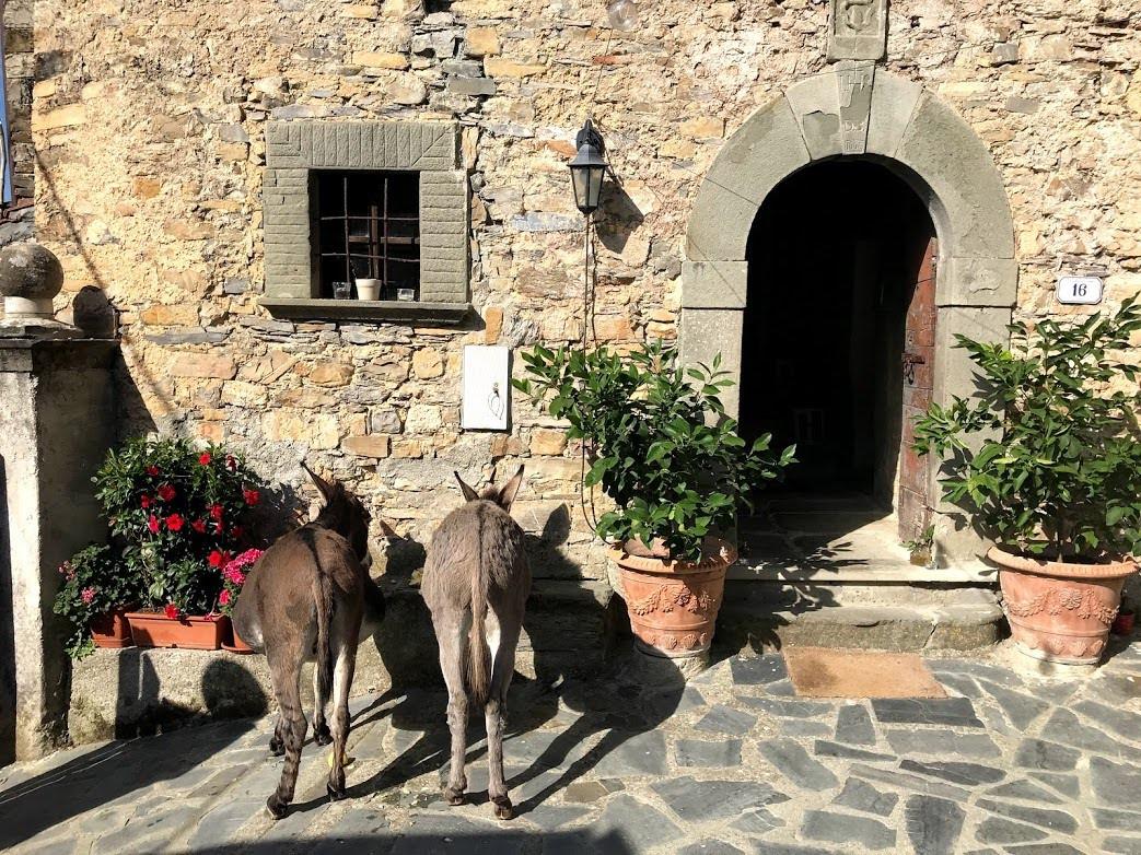 agriturismo b&b Luna di Quarazzana Lunigiana Donkeys to the entrance enjoy to give them an apple