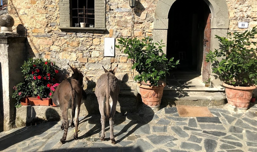 agriturismo b&b Luna di Quarazzana Lunigiana Donkeys to the entrance enjoy to give them an apple