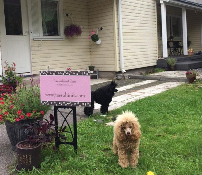 Tassuliinit Inn. Hyvä Hoitopaikka pienille koirille.  Tassuliinit Inn on pieni kodinomainen koirahotelli