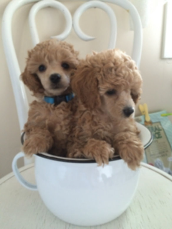 Koirahotelli Tassuliinit Inn. Hyvä Hoitopaikka pienille koirille.  Tassuliinit Inn on pieni kodinomainen koirahotelli