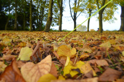 Autumn Leaves Guy Line