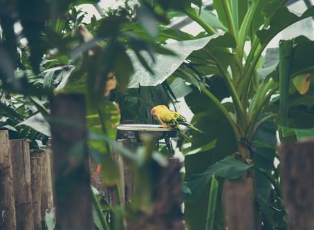 Aussie Backyard Bird Count Returns For 2020
