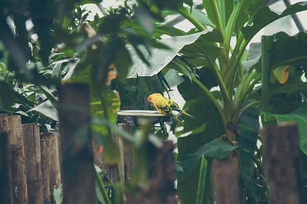 Domestic Parrots