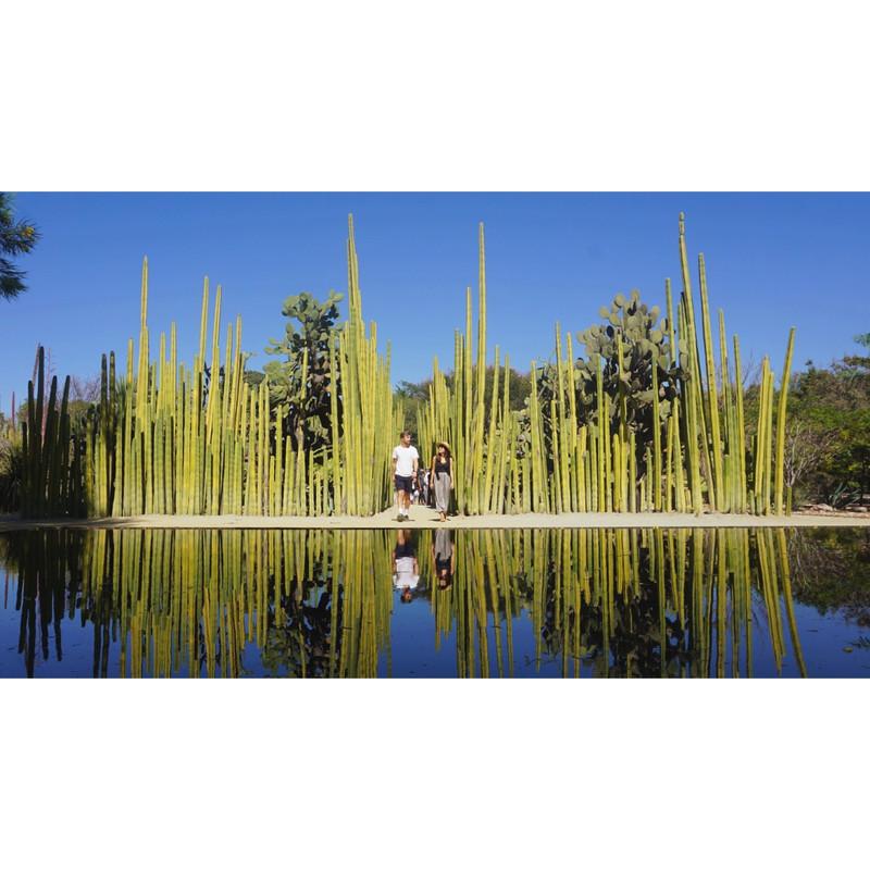 Botanical gardens Oaxaca