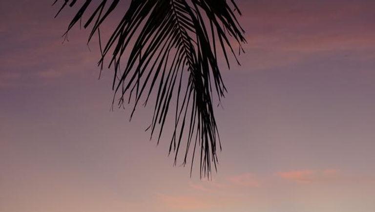 Fiji 3.jpg