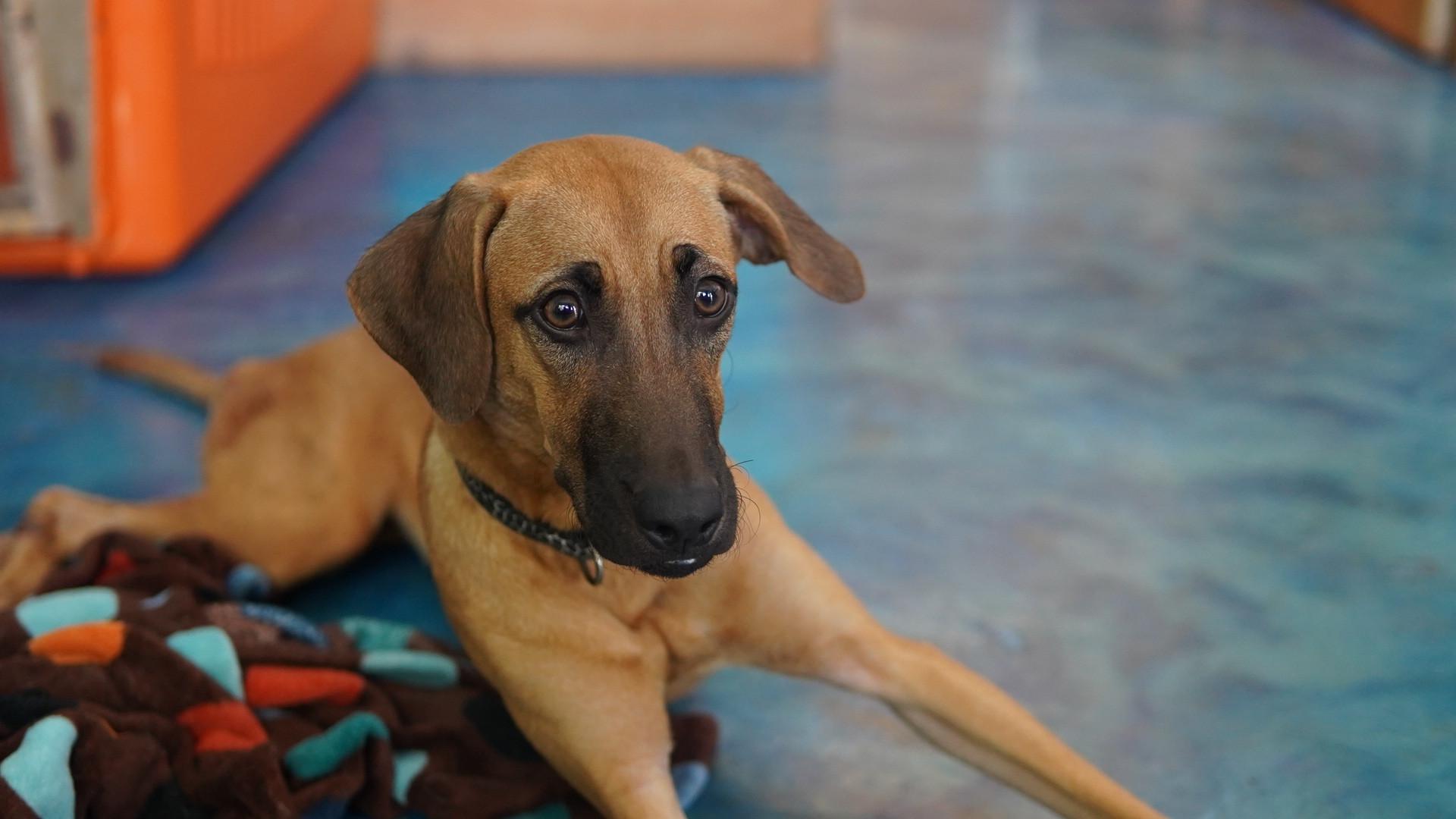Jasper's animal shelter