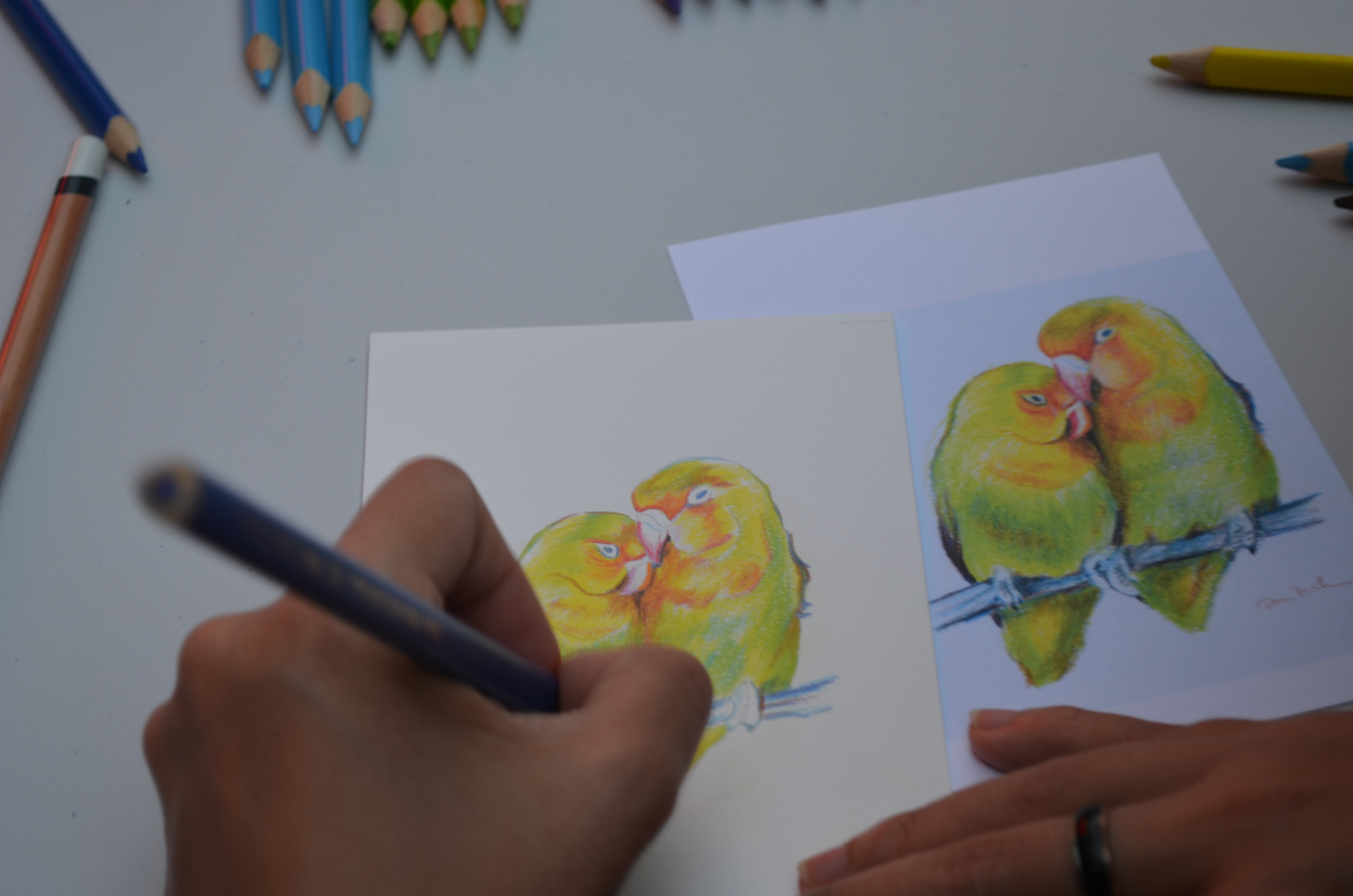 Intro To Paint With Coloured Pencils