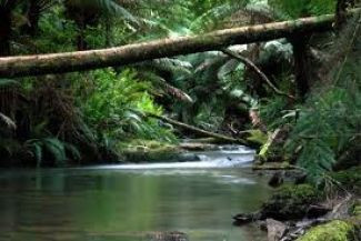 Great Otway National Park A Must See