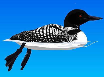 common_loon_edited.jpg
