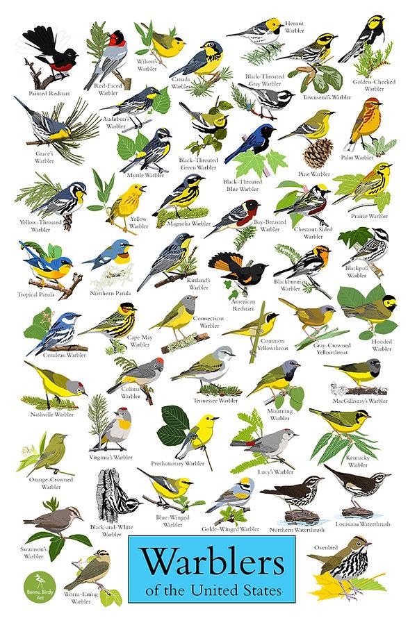 warblers_poster_promo.jpg