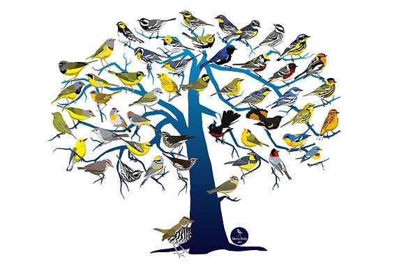 warblers_horizontal_promo.jpg