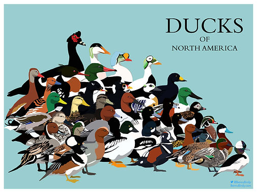 duck_poster.jpg