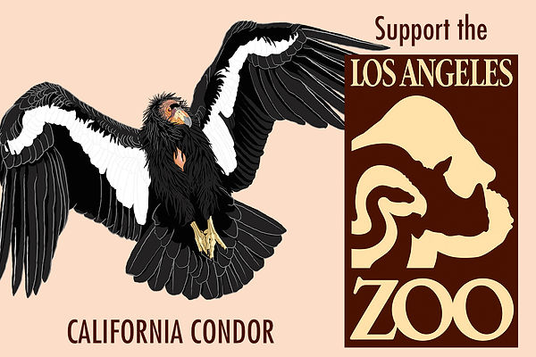 Donate to the Los Angeles Zoo, support Caliornia Conor conervation.