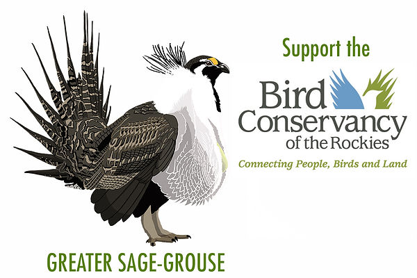 Donate to Bird Conservancy of the Rockies, support Sage-Groue conservation.
