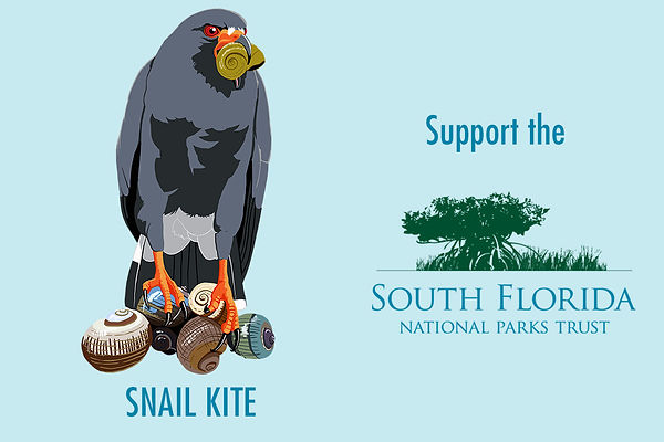Donate to Souh Forida National Parks Trust, support Eveglades Snal Kite conservation.