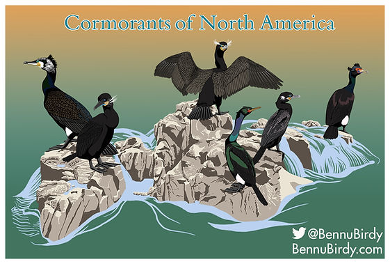 cormorants_small.jpg