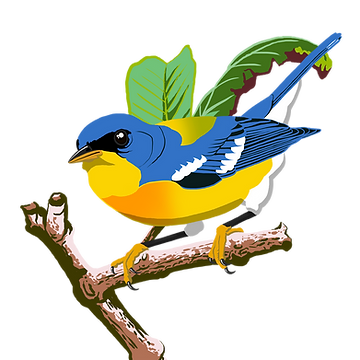 tropical_parula.png