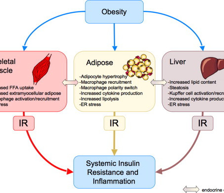 What is insulin resistance, and how does it lead to Diabetes?