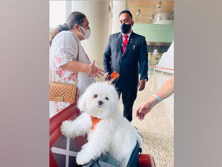 Indian Woman Books Entire Business Class Cabin For Her Pet Dog