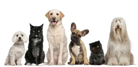 犬 集合.jpg