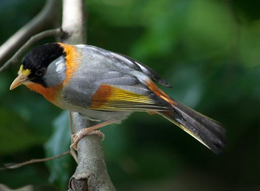 photography - flowers & birds
