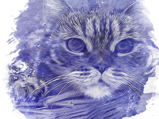 art - digital painting (cat series)