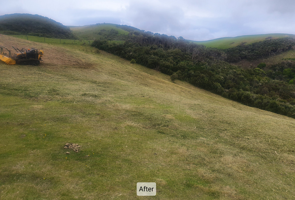 Slope Mowing Gorse Porirua 2.jpg