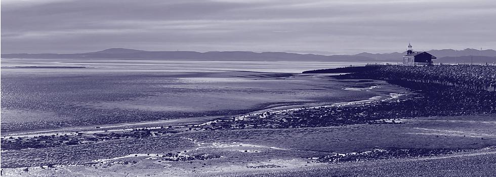 bay landscape-14.png