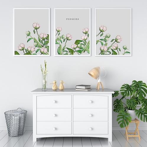 Peonies on dark grey, white or pale grey 'set of three' Botanical Art Prints